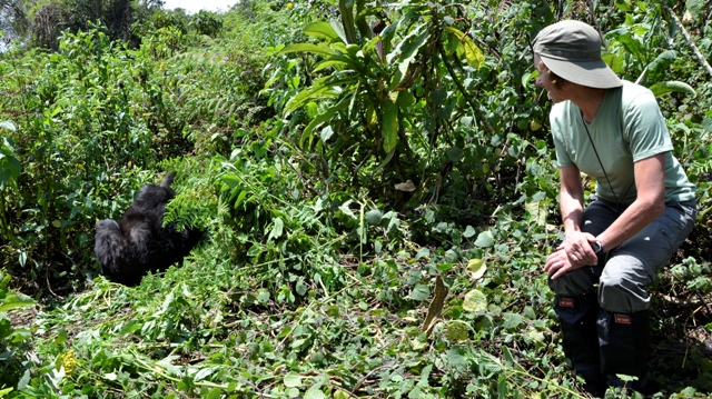 encountering the mountain gorillas rwanda
