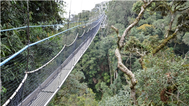 & Canopy Walk in Nyungwe Forest National Park Rwanda